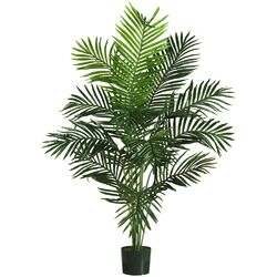 Paradise Palm Tree in Pot I
