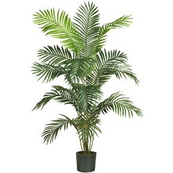 Paradise Palm Tree with Pot