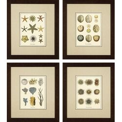 Phoenix Galleries Varieties of Starfish Giclee Print | Wayfair