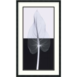 'Calla Leaf II' by Steven N. Meyers Framed Graphic Art