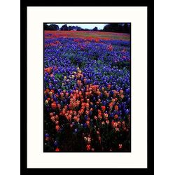 Landscapes 'Washington State Park, Texas' by Sally Brown Framed Photographic Print