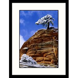 Landscapes 'Dwarf Pine with Snow, Rock' by Russell Burden Framed Photographic Print