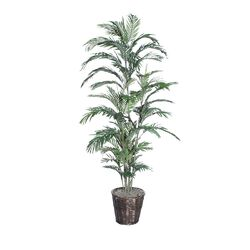 Deluxe Areca Palm Tree in Planter