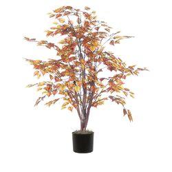 Birch Bush Tree in Pot