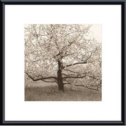 Apple Tree in Bloom by Christine Triebert Framed Photographic Print