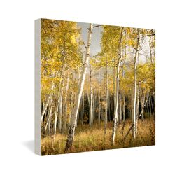 Aspen by Bird Wanna Whistle Photographic Print on Canvas
