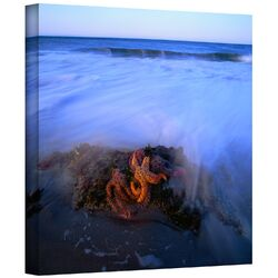 'Morning Sea Stars' by Dean Uhlinger Gallery-Wrapped Canvas Art