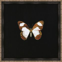 Butterflies I Framed Art in Black
