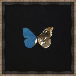 Butterflies V Framed Art in Black
