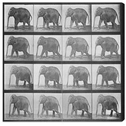 Elephant in Motion Photographic Print on Canvas