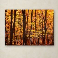 'Delicious Autumn' by CATeyes Photographic Print on Canvas