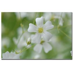 Baby's Breath by Kurt Shaffer, Canvas Art - 16