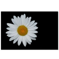 Daisy on Black by Kurt Shaffer, Canvas Art - 16