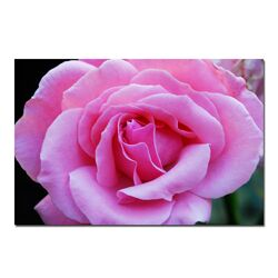 Pink and Beautiful by Kurt Shaffer, Canvas Art - 16