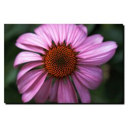 Purple Daisy by Kurt Shaffer, Canvas Art - 24