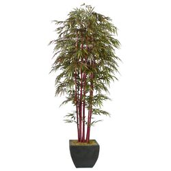 Realistic Bamboo Tree in Planter