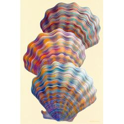Three Scallops by Jack Dickerson Painting Print on Canvas
