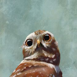 Cover Owl by Mincing Mockingbird Painting Print on Canvas
