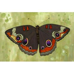 Buckeye Butterfly by Kate Halpin Painting Print on Canvas