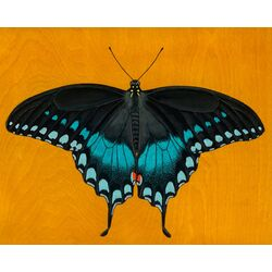 Black Swallowtail Butterfly by Kate Halpin Painting Print on Canvas