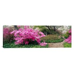 Panoramic Azaleas in The Garden of Eden at The Ladew Topiary Gardens, Monkton, Maryland ...