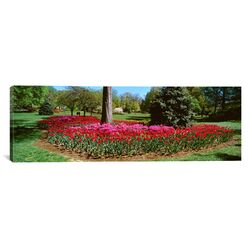 Panoramic Azalea and Tulip Flowers in a Park, Sherwood Gardens, Baltimore, Maryland ...