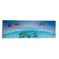 Panoramic Bottlenose Dolphin Jumping While Turtles Swimming Under Water Photographic Print on ...