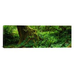 Panoramic Hoh Rainforest, Olympic National Forest, Washington Photographic Print on Canvas