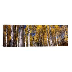 Panoramic 'Forest, Grand Teton National Park, Teton County, Wyoming' Photographic Print on Canvas