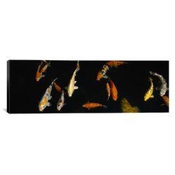 Panoramic Japanese Koi Fish in the Capitol Aquarium, Sacramento, California Photographic Print ...