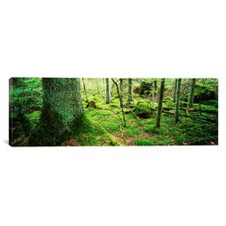 Panoramic 'Close-up of Moss on a Tree Trunk in the Forest, Siggeboda, Smaland, Sweden' ...