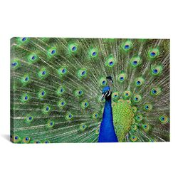 Photography Peacock Feathers Graphic Art on Canvas