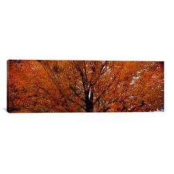 Panoramic Maple Tree in Autumn, Vermont Photographic Print on Canvas