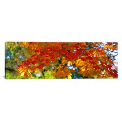 Panoramic Fall Foliage, Guilford, Baltimore City, Maryland Photographic Print on Canvas