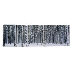 Panoramic Snow Covered Trees in a Forest, Austria Photographic Print on Canvas