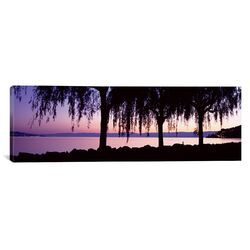 Panoramic Weeping Willows, Lake Geneva, St. Saphorin, Switzerland Photographic Print on Canvas