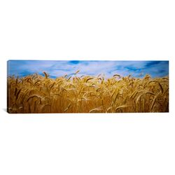 Panoramic Wheat Crop Growing in a Field, Palouse Country, Washington State Photographic Print ...