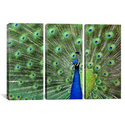 Photography Peacock Feathers 3 Piece on Canvas Set