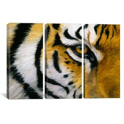 Decorative Art Eye of The Tiger Lucie Bilodeau 3 Piece on Canvas Set