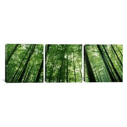 Photography Low Angle View of Beech Trees Baden-Wurttemberg, Germany 3 Piece on Canvas Set