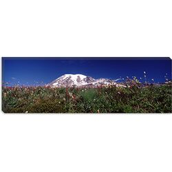 Wildflowers on Mountains, Mt Rainier, Pierce County, Washington State Canvas Wall Art