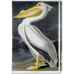 'American White Pelican' by John James Audubon Graphic Art on Canvas