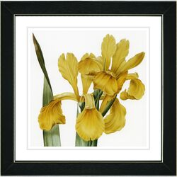 Vintage Botanical No. 46W by Zhee Singer Framed Giclee Print Fine Wall Art