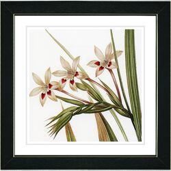 Vintage Botanical No. 43W by Zhee Singer Framed Giclee Print Fine Wall Art