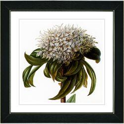 Vintage Botanical No. 37W by Zhee Singer Framed Giclee Print Fine Wall Art