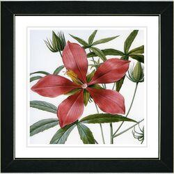 Vintage Botanical No. 22W by Zhee Singer Framed Giclee Print Fine Wall Art