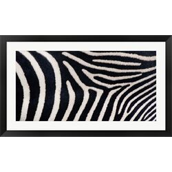 Close-up of Greveys Zebra Stripes Frame Art
