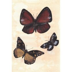 Butterfly Study No.2 by Christine Lindstrom Framed Painting Print