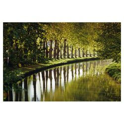 Graham and Brown Tree Walk Photographic Print on Canvas