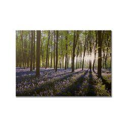 Portfolio Bluebell Landscape Printed Photographic Print on Canvas